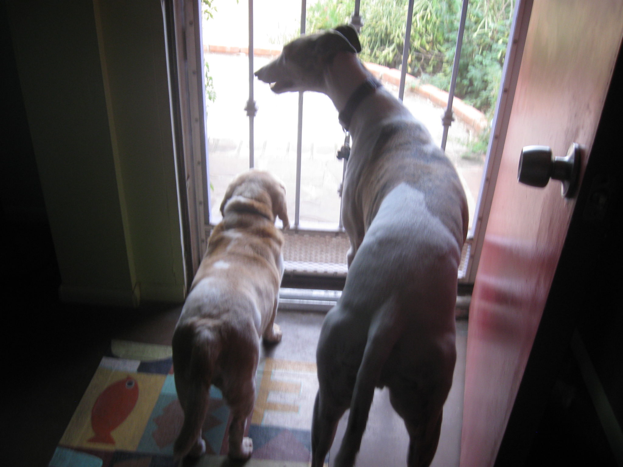 Calvin & Jett look out the window
