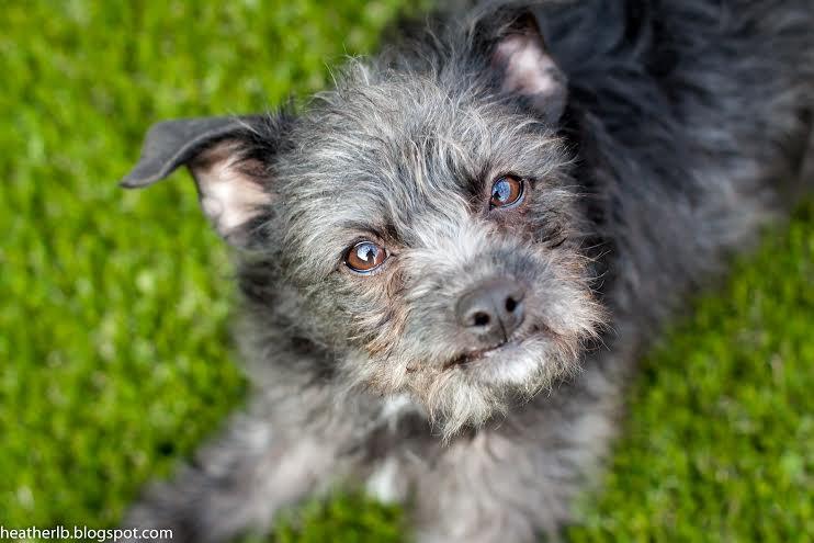 Tina says: Adopt me