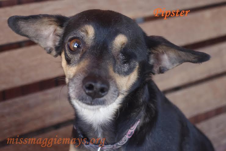 Tucson fundraiser for dog rescue