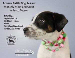 arizona cattle dog rescue
