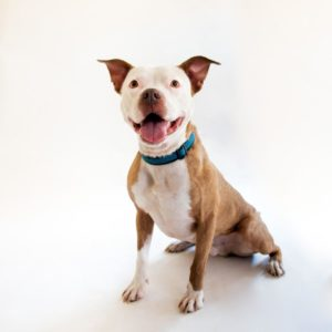 Save-a-bull rescue tucson