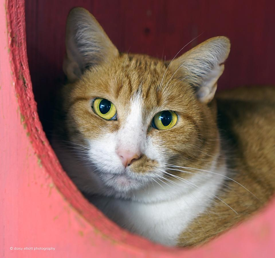 Hermitage cat shelter