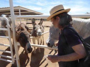 Zen Donkey Sanctuary