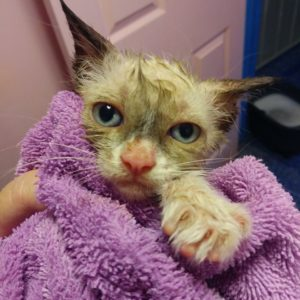 cactus studded kitten saved